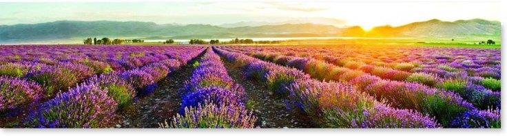 lavender-company-pg2
